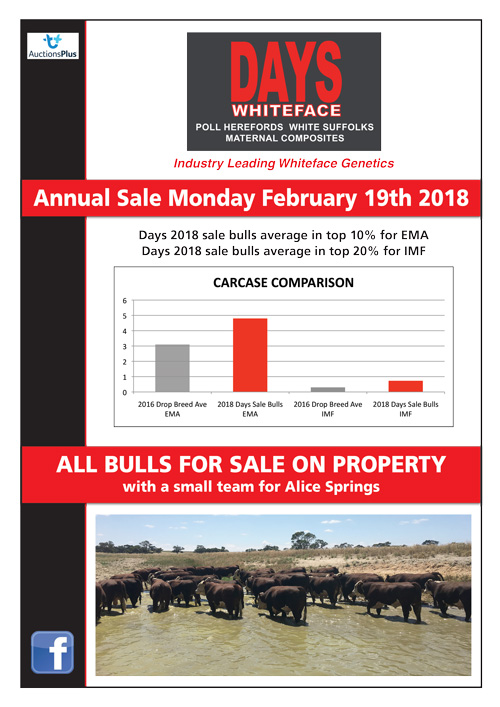 2018 Days Whiteface Newsletter - Cattle
