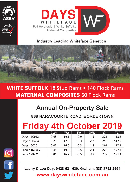 Days Whiteface Sheep Newsletter 2019