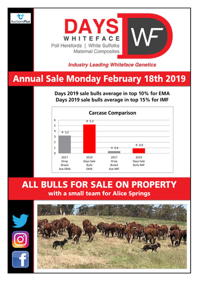 2019 Days Whiteface Cattle Newsletter