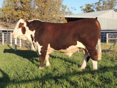 Lot 160 Days Cauldron G310