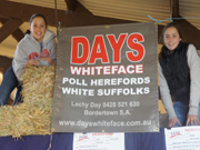 Days Whiteface daughters at show poll herefords and white suffolks